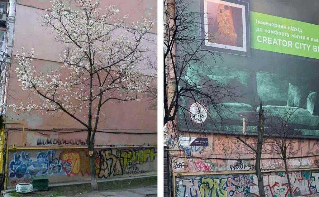 в Киеве срезали магнолию ради рекламного баннера